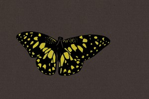 Drawing of a black and yellow butterfly