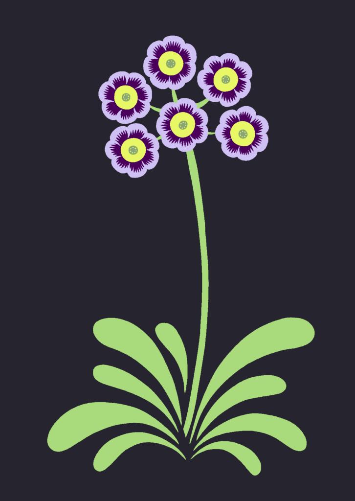 blueauricula