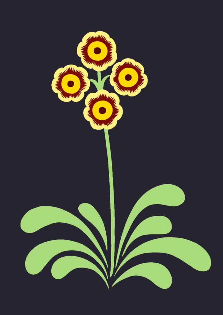 orangeauricula