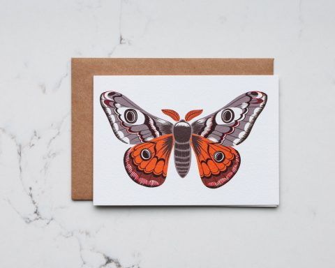 An illustration of an emperor moth