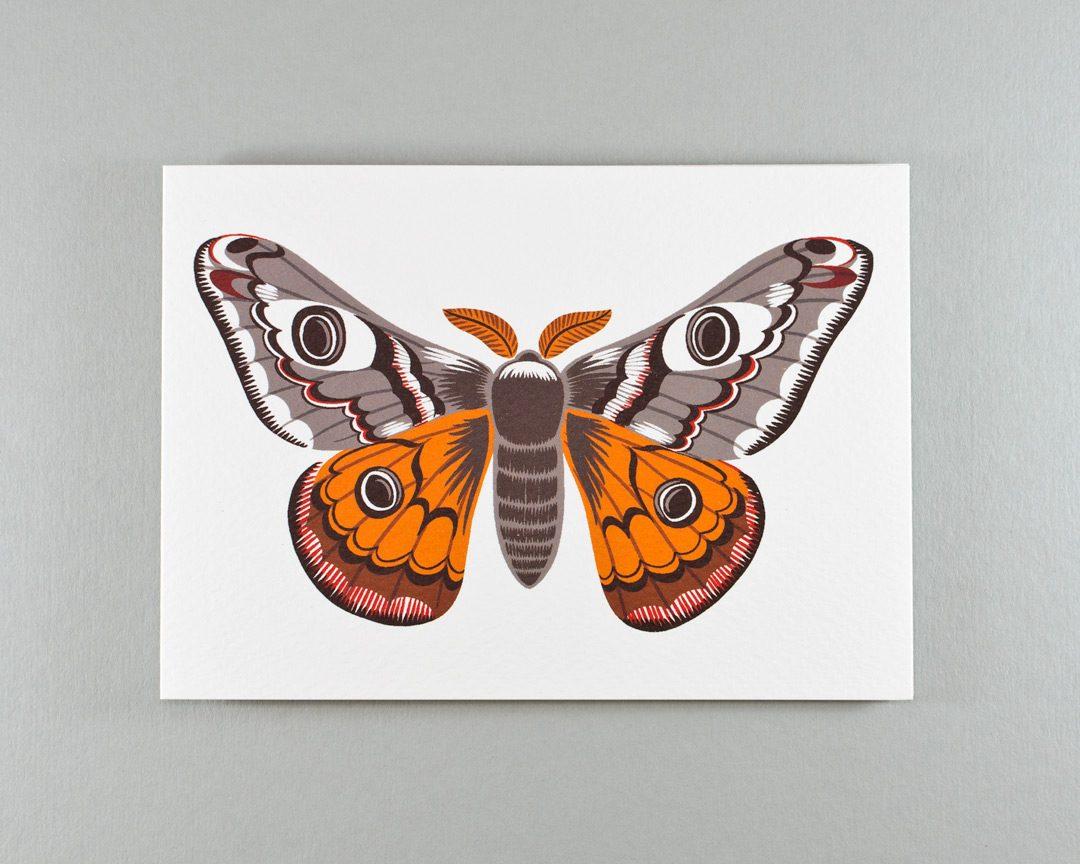 An illustration of an emperor moth