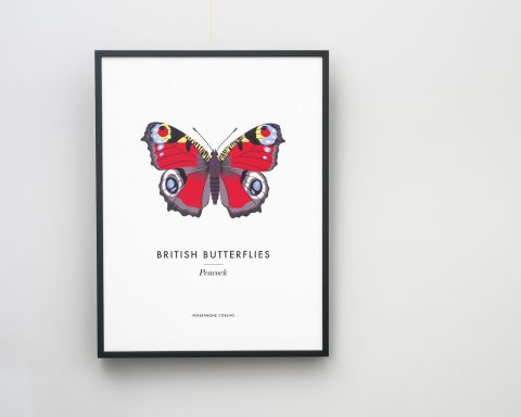 A giclée print of a peacock butterfly illustration