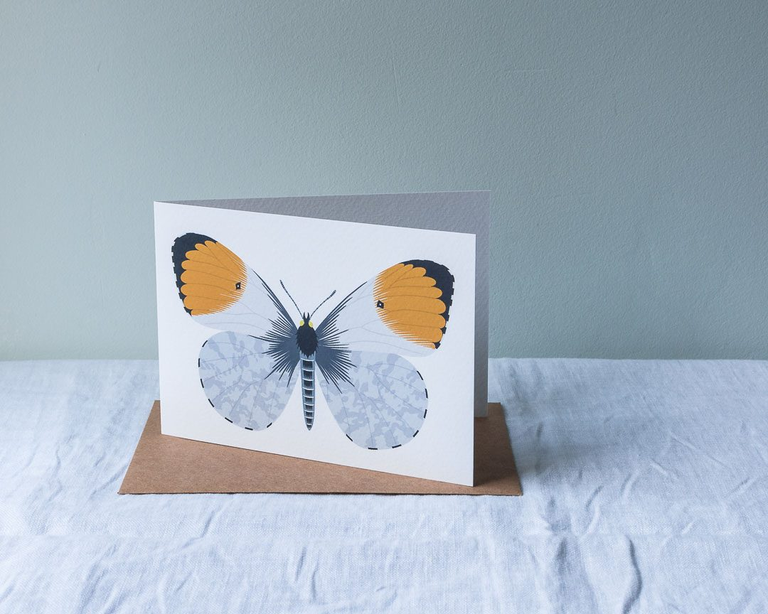 An orange-tip butterfly greeting card
